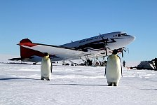 Penguins and Plane