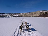 Dogsled on trail