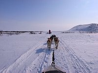 Dogsledding front view