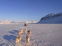 Tempelfjorden dog sledding