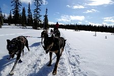 Umnas area dog sledding