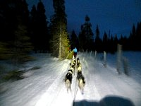 Dogsledding in twilight